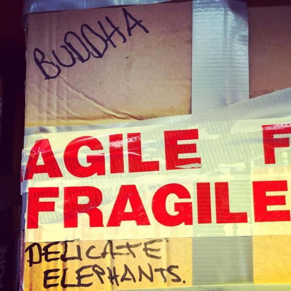 AGILE FRAGILE DELICATE ELEPHANTS