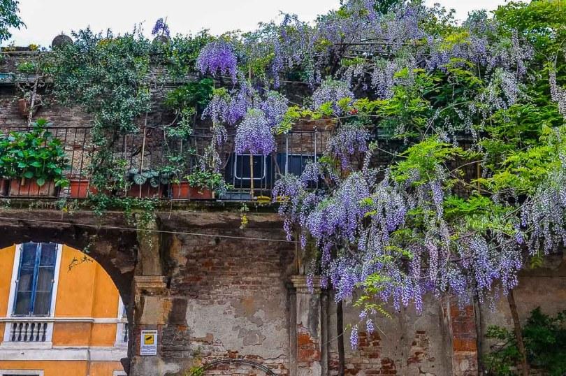 Balcony garden design idea - Vicenza, Italy - rossiwrites.com