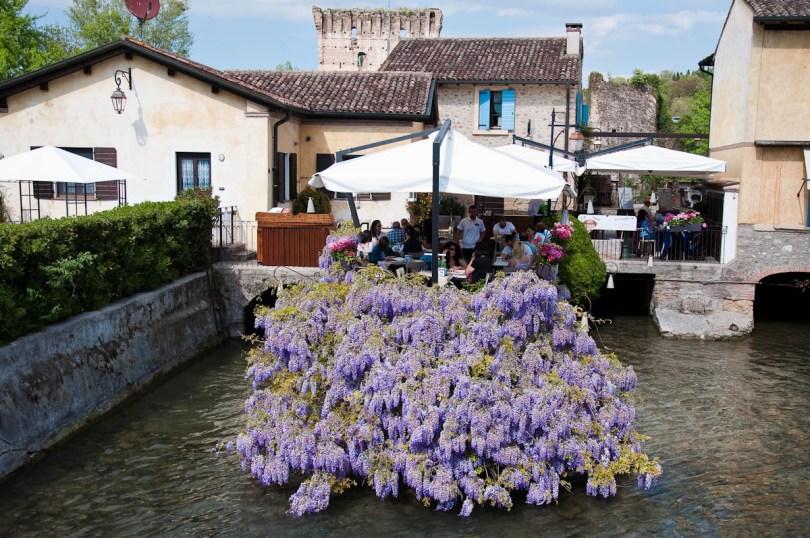 Wisteria draping a restaurant on water, Borghetto sul Mincio, Veneto, Italy - rossiwrites.com