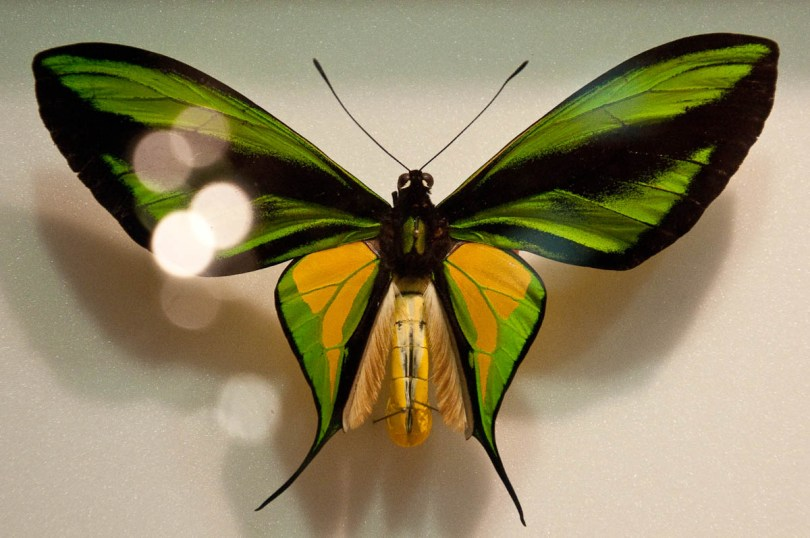 Butterfly display, Esapolis, Padua, Veneto, Italy - www.rossiwrites.com