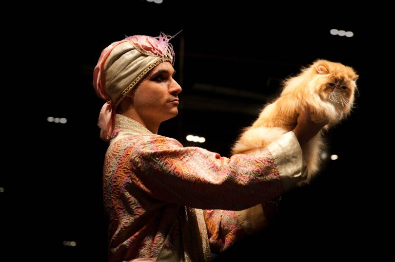 Persian cat on the catwalk, Golden Cat Show, Vicenza, Italy www.rossiwrites.com