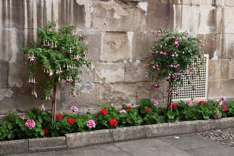 Decorative plants, Pembroke College, Cambridge, England - www.rossiwrites.com