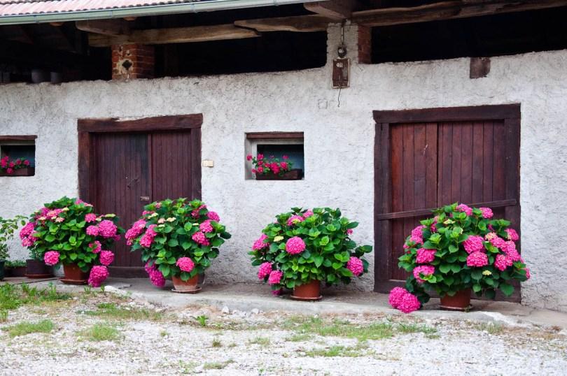 Potted plants adorn a large barn, Primostek, Slovenia - www.rossiwrites.com