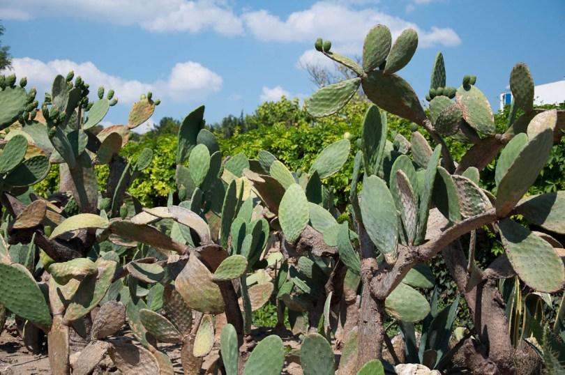 Cacti, Botanical Garden, Balchik, Bulgaria - www.rossiwrites.com
