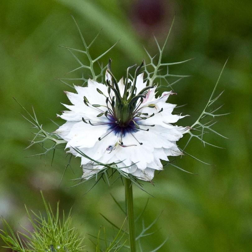 Flower in bloom, England - www.rossiwrites.com