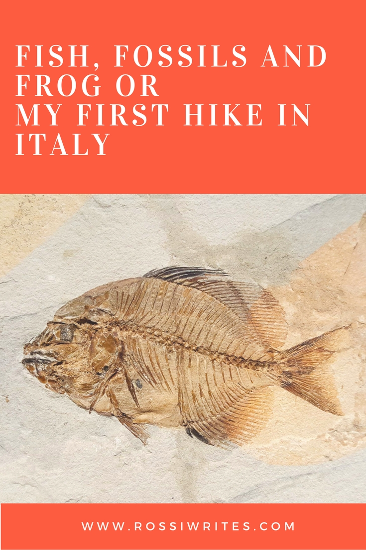 Pin Me - Fish, Fossils and Frog or My First Hike in Italy - www.rossiwrites.com