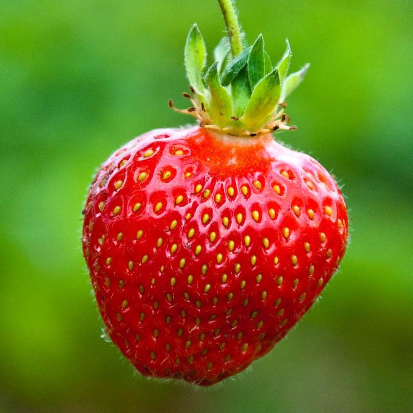 Strawberry, England - www.rossiwrites.com
