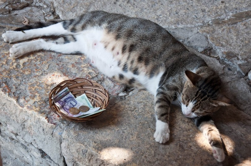 The pregnant cat, Royal Palace 'The Quiet Nest', Balchik, Bulgaria - www.rossiwrites.com