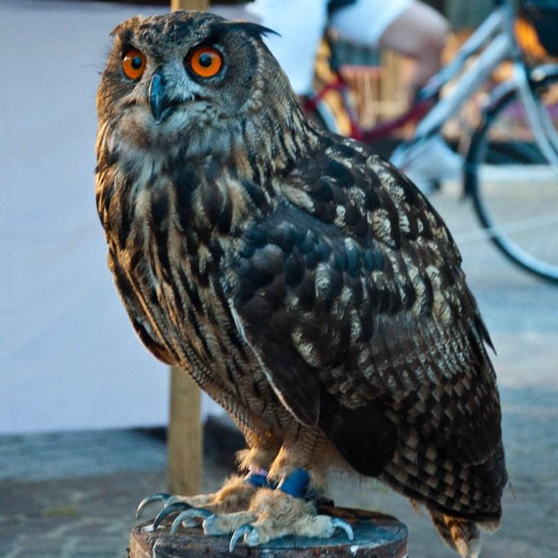 An owl, Mediaevil Fair, Castelfranco Veneto, Italy - www.rossiwrites.com