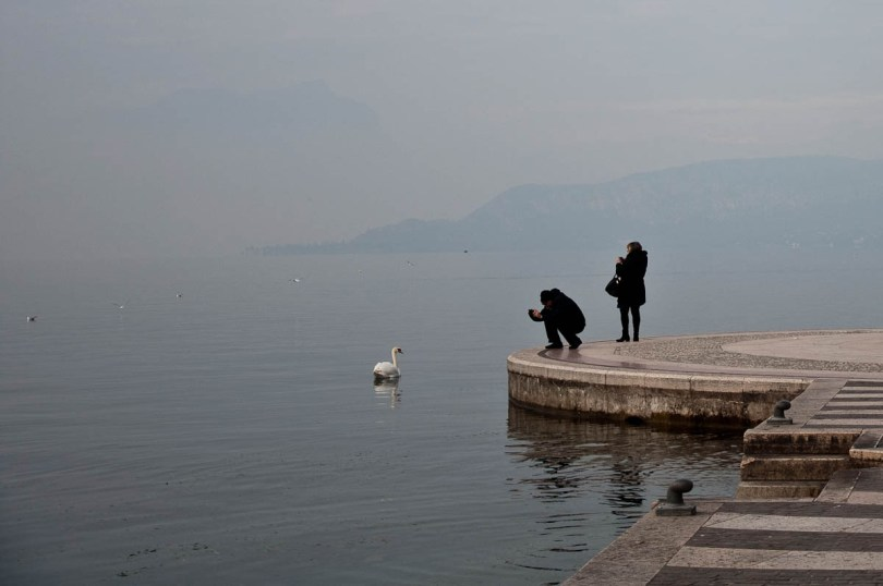Photographing the swans - Lazise, Lake Garda, Italy - www.rossiwrites.com