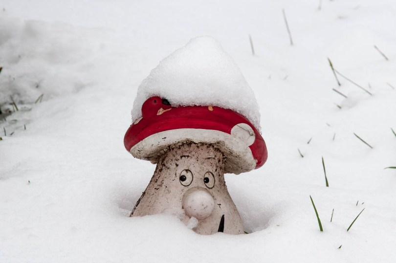 A mushroom garden ornament in the snow - Parco Querini, Vicenza, Veneto, Italy - www.rossiwrites.com