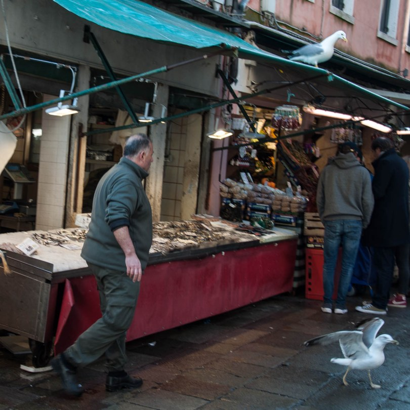 A fishmonger chases a seagull away from his stall - Rialto Fish Market, Venice, Italy - www.rossiwrites.com