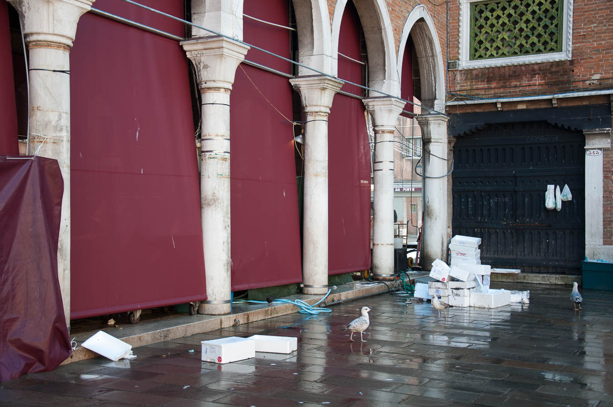 Seagulls And Empty Boxes At The Back Of Big Market Hall Rialto Fish Venice Italy Rossiwrites