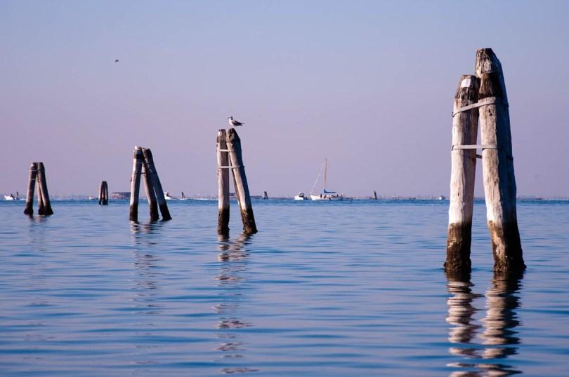 Depth-marking logs - Chioggia, Veneto, Italy - www.rossiwrites.com