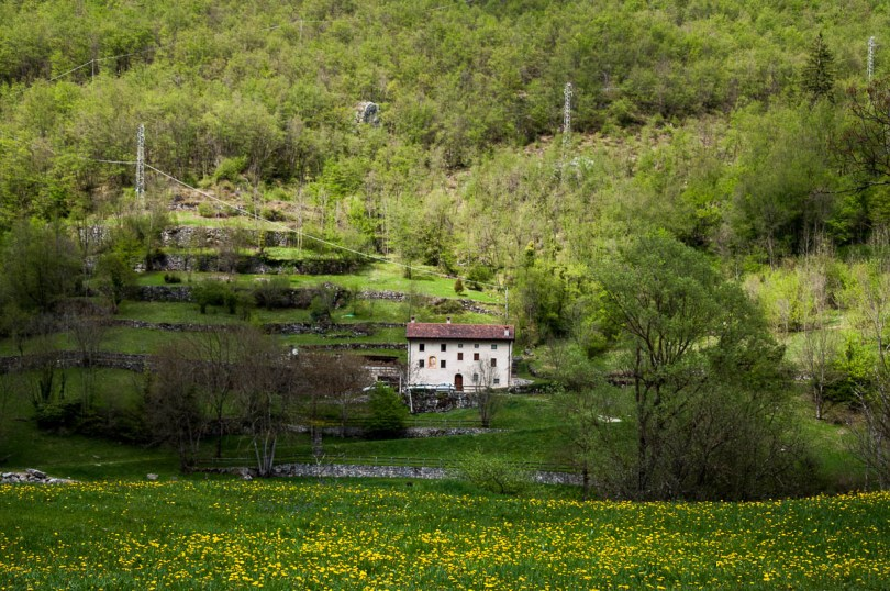 A dandelion meadow, terraced grounds and a house - Laghi, Veneto, Italy - www.rossiwrites.com