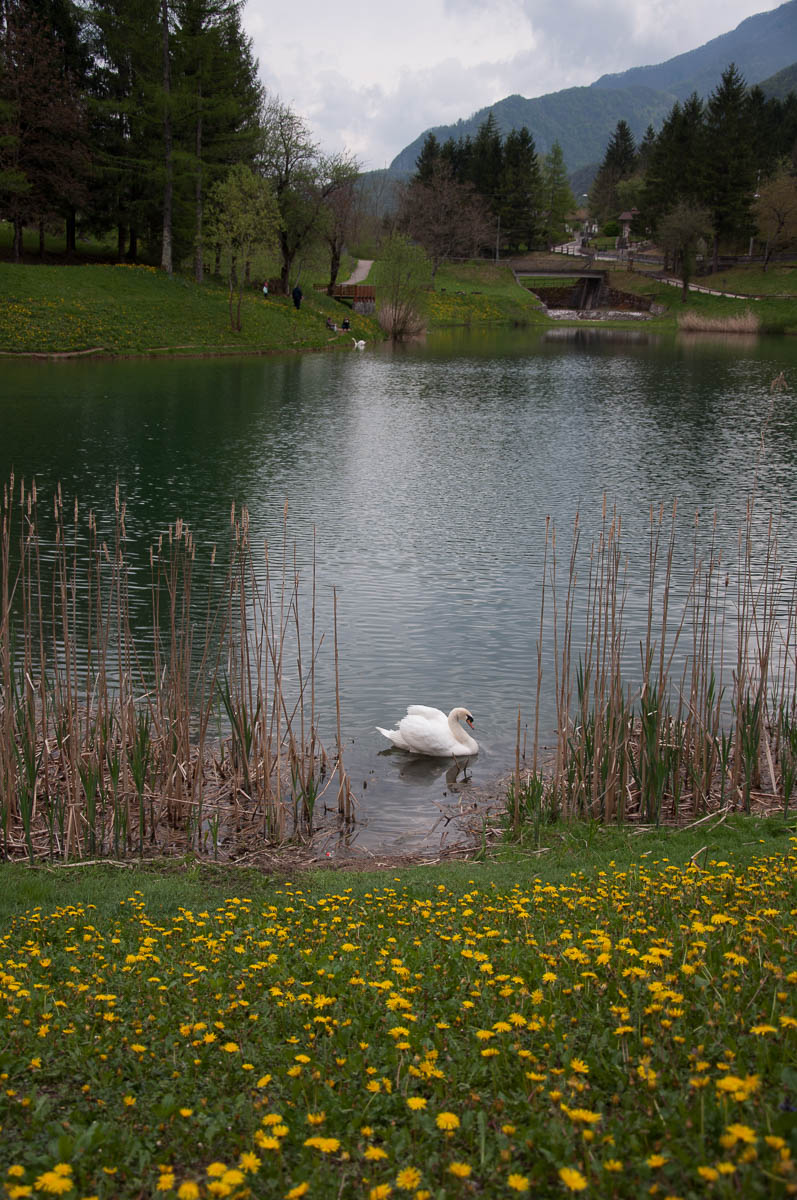 The lake and the swan - Laghi, Veneto, Italy - www.rossiwrites.com