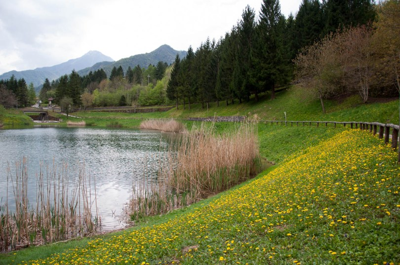 The lake with a carpet of dandelions - Laghi, Veneto, Italy - www.rossiwrites.com