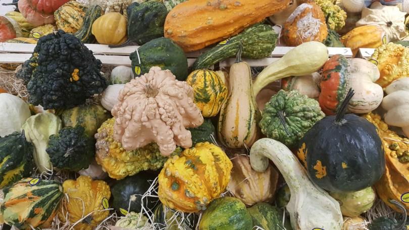 Decorative pumpkins - Vicenza, Veneto, Italy - www.rossiwrites.com