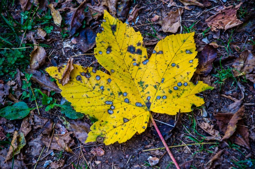 A yellow leaf on the ground - Excalibur Nature Walk - Tonezza del Cimone, Veneto, Italy - www.rossiwrites.com