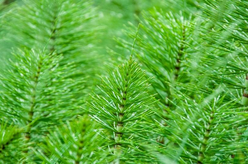 Lush ferns - Lake Fimon, Arcugnano, Vicenza, Veneto, Italy - www.rossiwrites.com