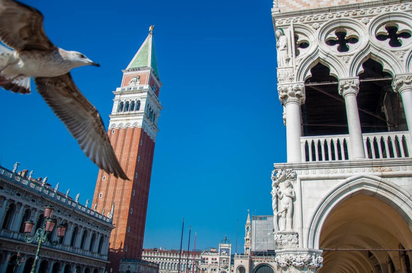 A photobombing seagull - Venice, Italy - www.rossiwrites.com