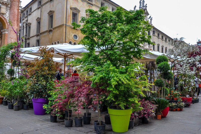A market stall selling potted shrubs and trees - Vicenza, Italy - rossiwrites.com