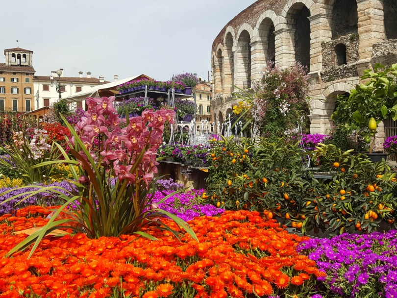 Flower market in front of Arena di Verona - Verona, Italy - www.rossiwrites.com