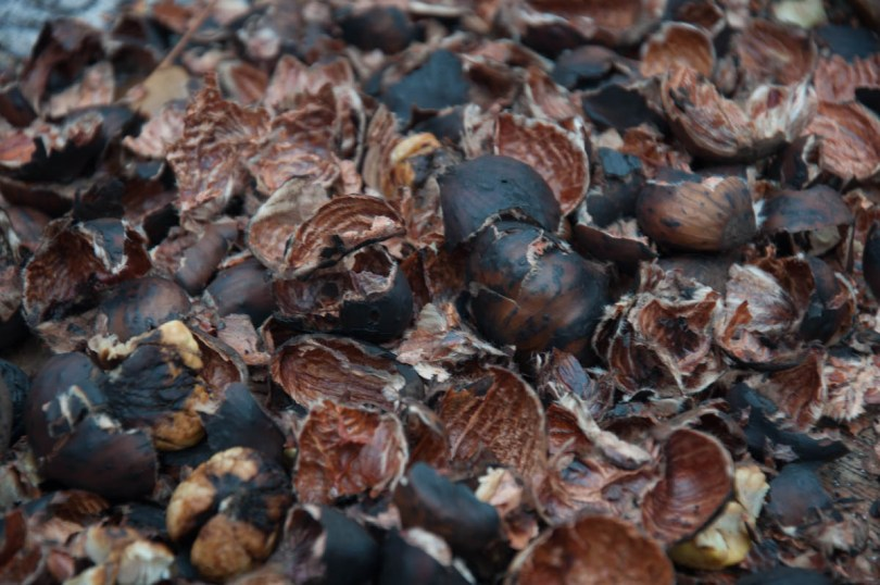Empty chestnut shells - Borghetto sul Mincio, Veneto, Italy - www.rossiwrites.com