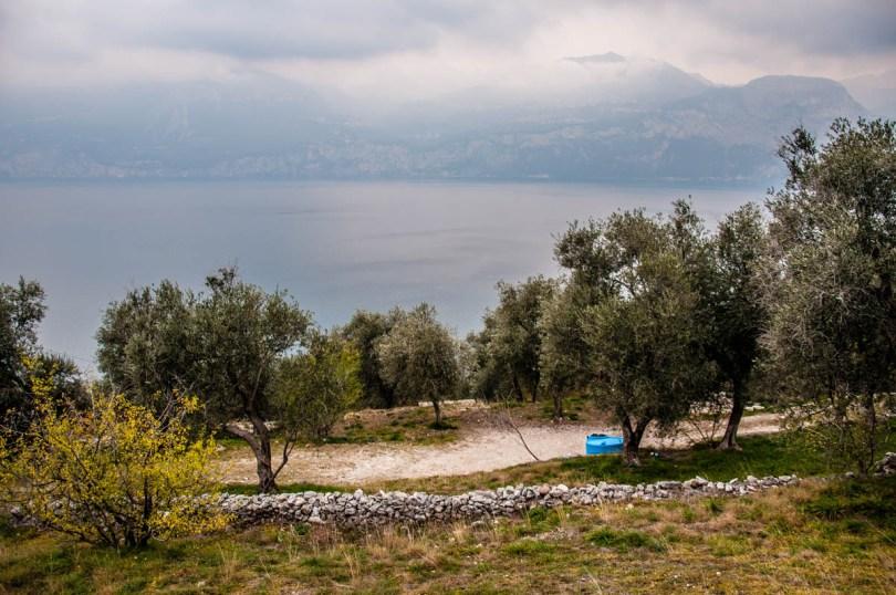 Olive groves above Lake Garda - Campo di Brenzone, Lake Garda, Italy - www.rossiwrites.com