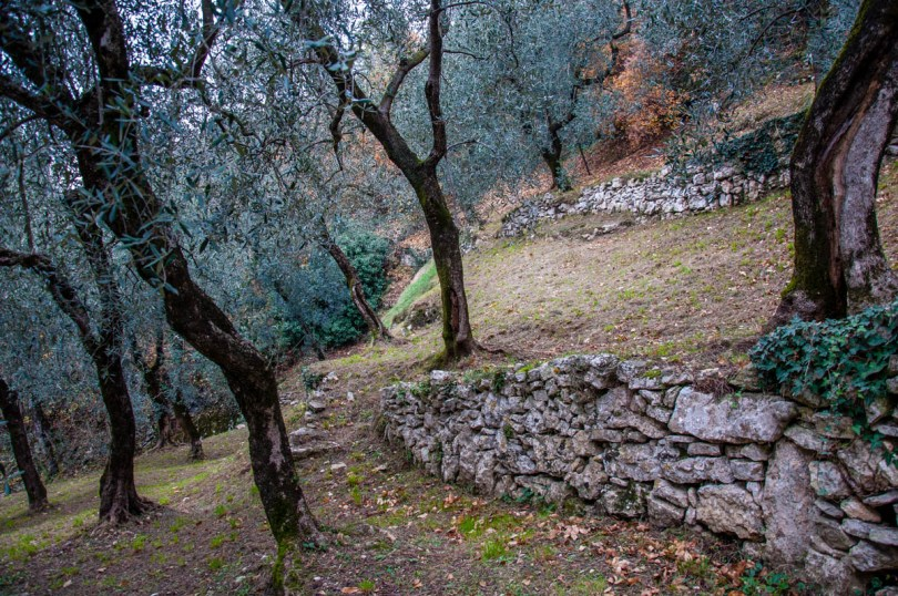 Terraced olive groves - Campo di Brenzone, Lake Garda, Italy - www.rossiwrites.com