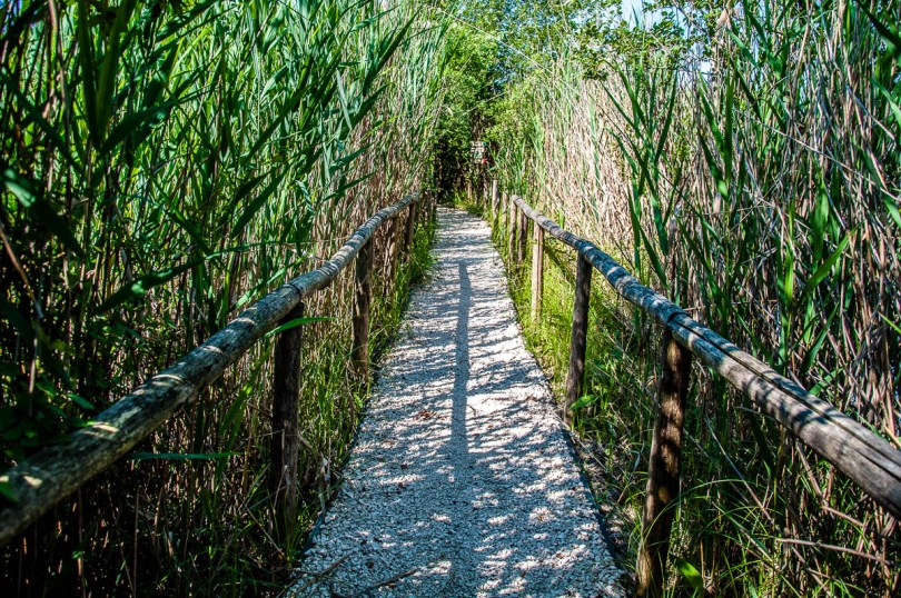 The path leading inside the nature and wildlife area - Oasi Stagni di Casale, Vicenza, Italy - www.rossiwrites.com