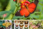 3 Butterfly Houses (and One Insect Museum) You Need to Visit in Northern Italy - www.rossiwrites.com