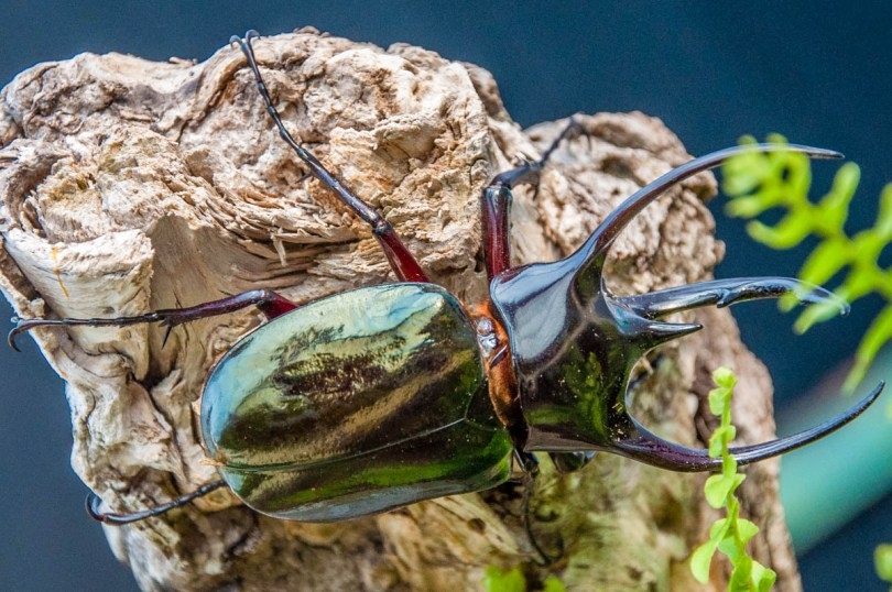 Beetle - Butterfly House, Oasi Rossi - Santorso, Italy - www.rossiwrites.com
