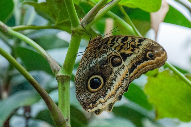 Butterfly - Butterfly House - Bordano, Friuli-Venezia Giulia, Italy - www.rossiwrites.com