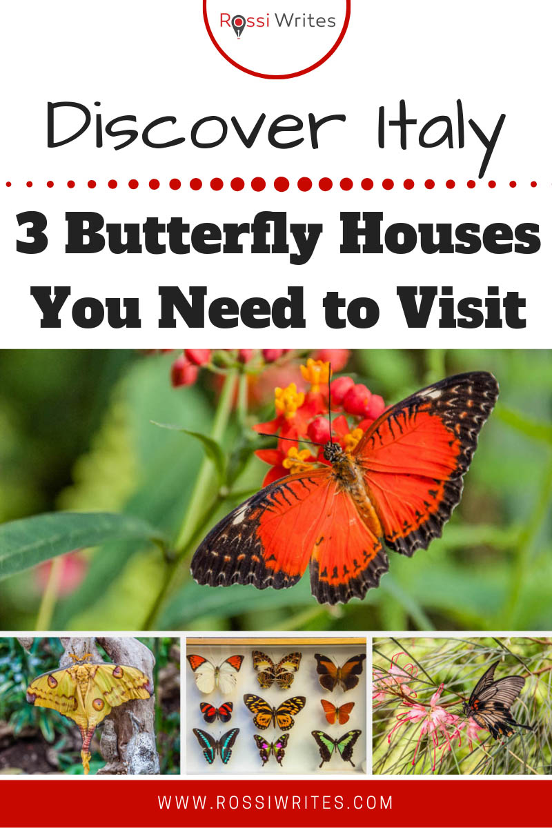 Pin Me - 3 Butterfly Houses (and One Insect Museum) You Need to Visit in Northern Italy - www.rossiwrites.com