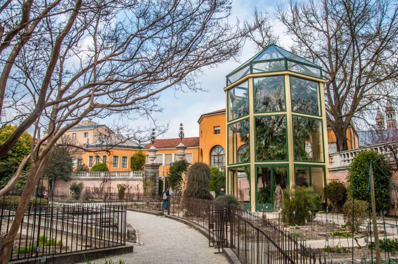 Goethe's Palm - Padua University Botanical Garden - Padua, Veneto, Italy - rossiwrites.com