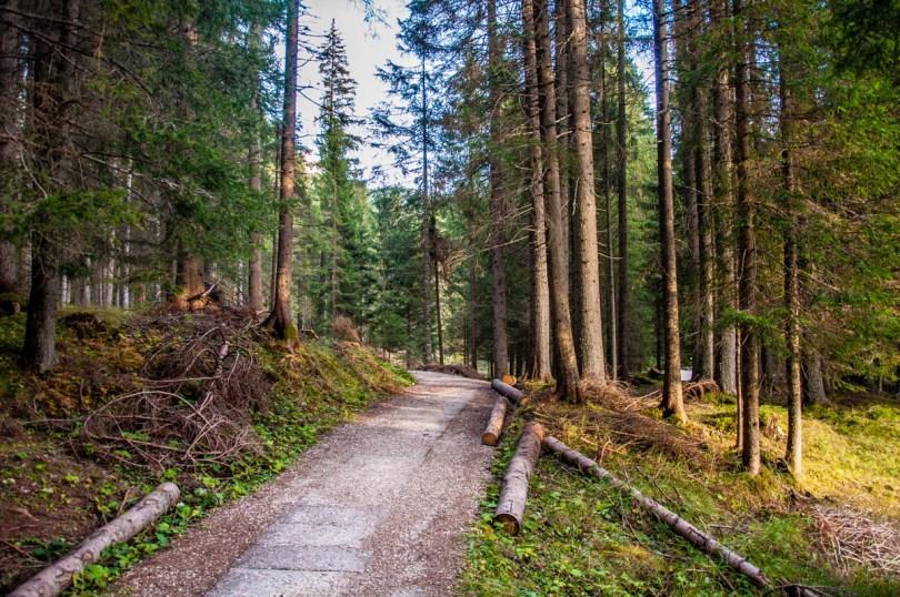 Cut logs in Paneveggio - The Violins' Forest - with the Pale di San Martino - Dolomites, Trentino, Italy - rossiwrites.com