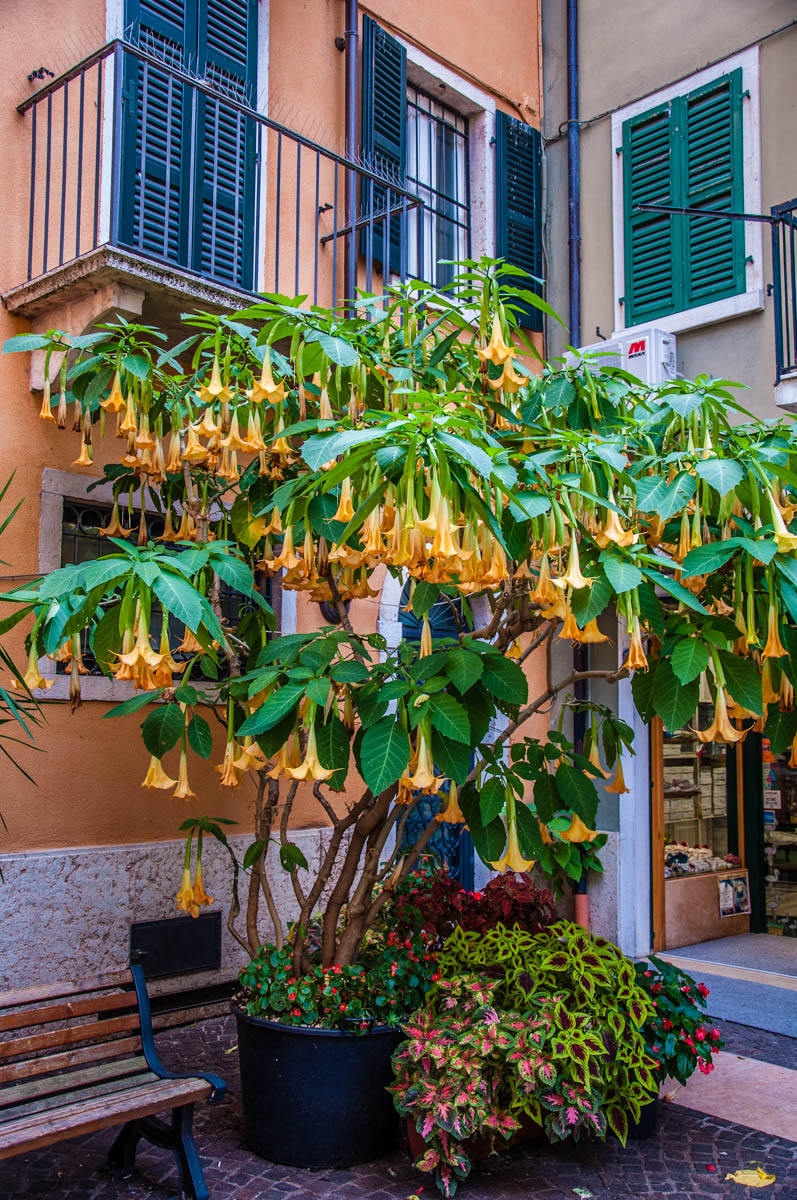 Hidden courtyard off Lazise's main square - Lazise, Veneto, Italy - rossiwrites.com