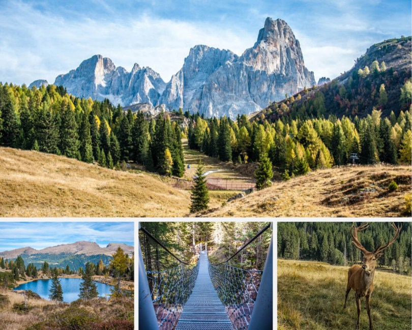 Paneveggio - Exploring the Violins' Forest in the Dolomites, Italy - rossiwrites.com