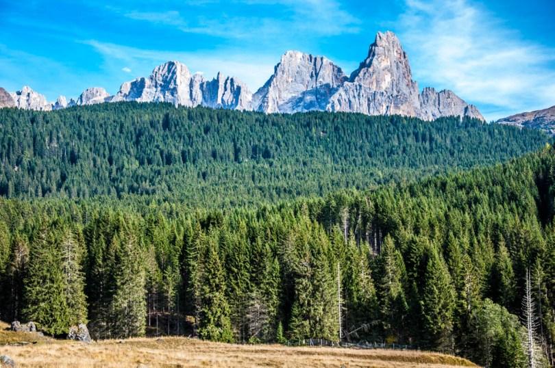Paneveggio - The Violins' Forest - with the Pale di San Martino - Dolomites, Trentino, Italy - rossiwrites.com