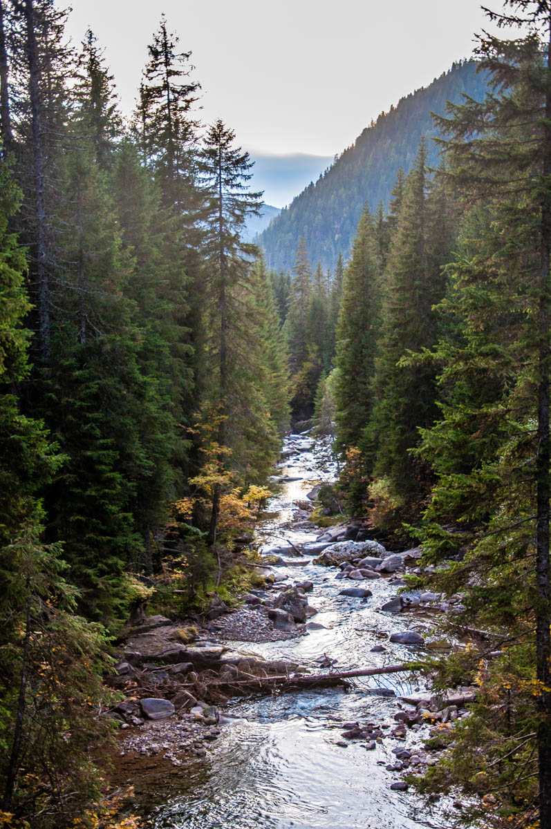Travignolo stream in Paneveggio - The Violins' Forest - Dolomites, Trentino, Italy - rossiwrites.com