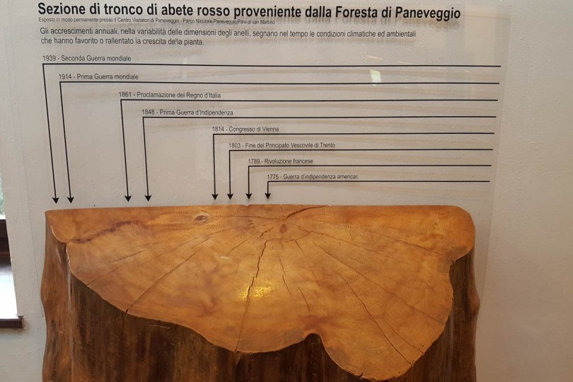 Tree trunk from Paneveggio - The Violins' Forest - Dolomites, Trentino, Italy - rossiwrites.com