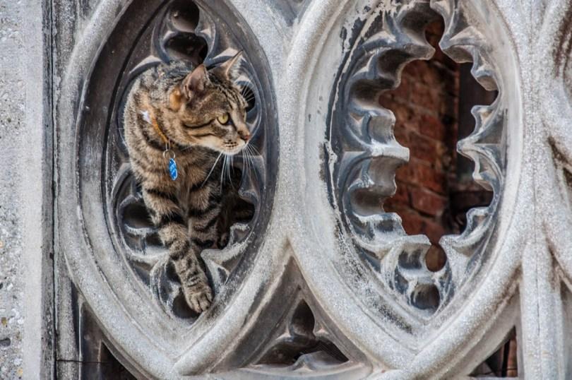A Venetian Cat - Venice, Italy - rossiwrites.com