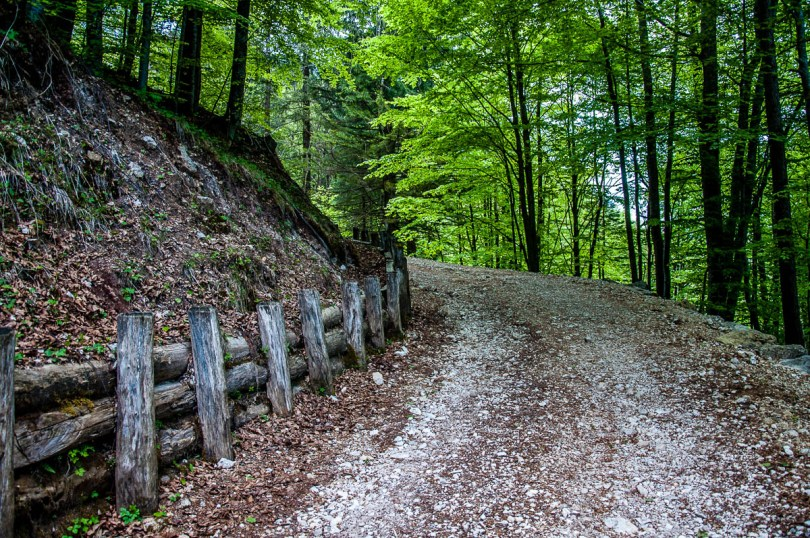 The path going through the forest - Sentiero dei Grandi Alberi - Province of Vicenza, Veneto, Italy - rossiwrites.com