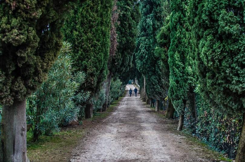 The Cypress Avenue - Punta di San Vigilio - Lake Garda, Italy - rossiwrites.com