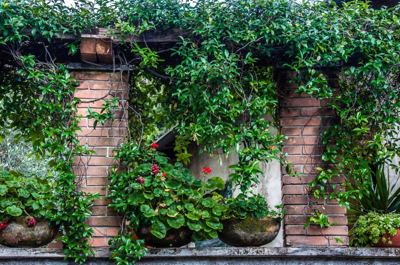 Pots with plants - Nesso, Lake Como, Italy - rossiwrites.com