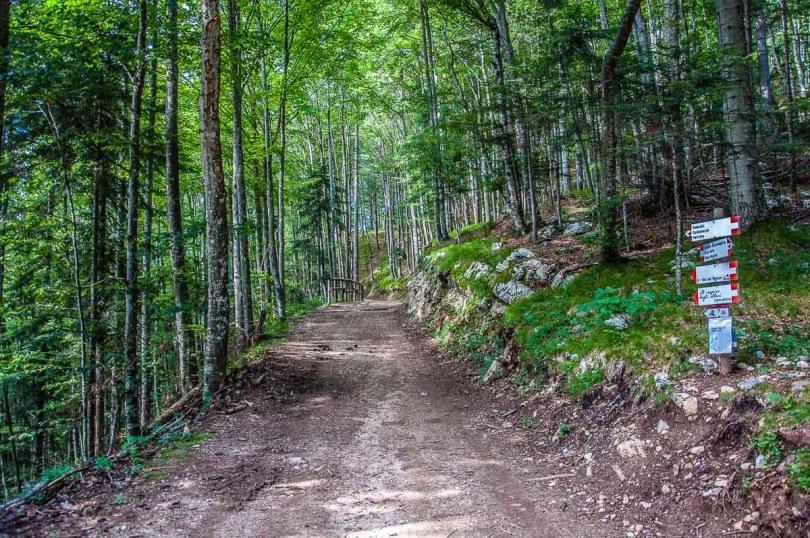 Thematic hiking path Il Respiro degli Alberi - Trentino, Italy - rossiwrites.com