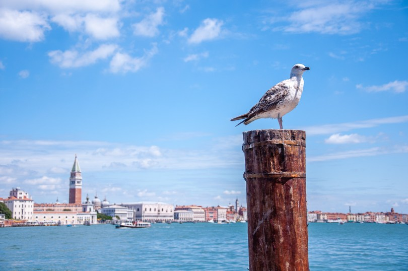Venice seen from the island of Giudecca - Venice, Italy - rossiwrites.com