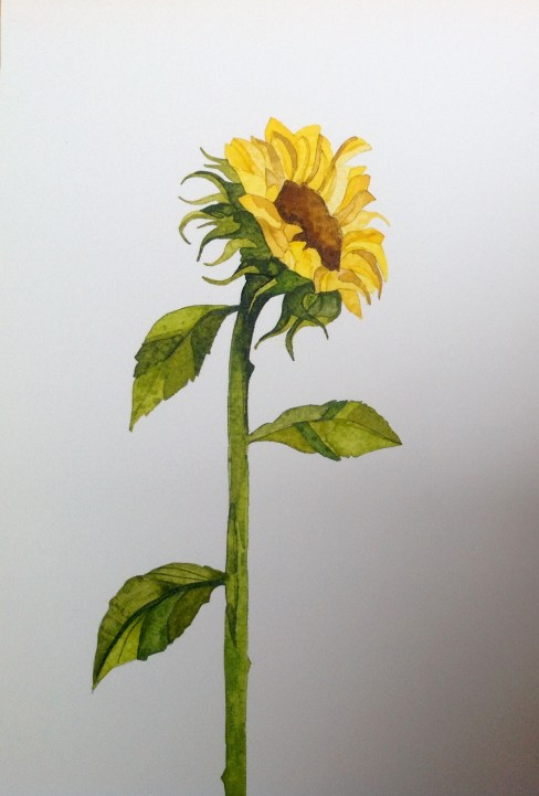Sunflower III 19 x 28 cm Inks on Moulin du Roy Torchon. POA
