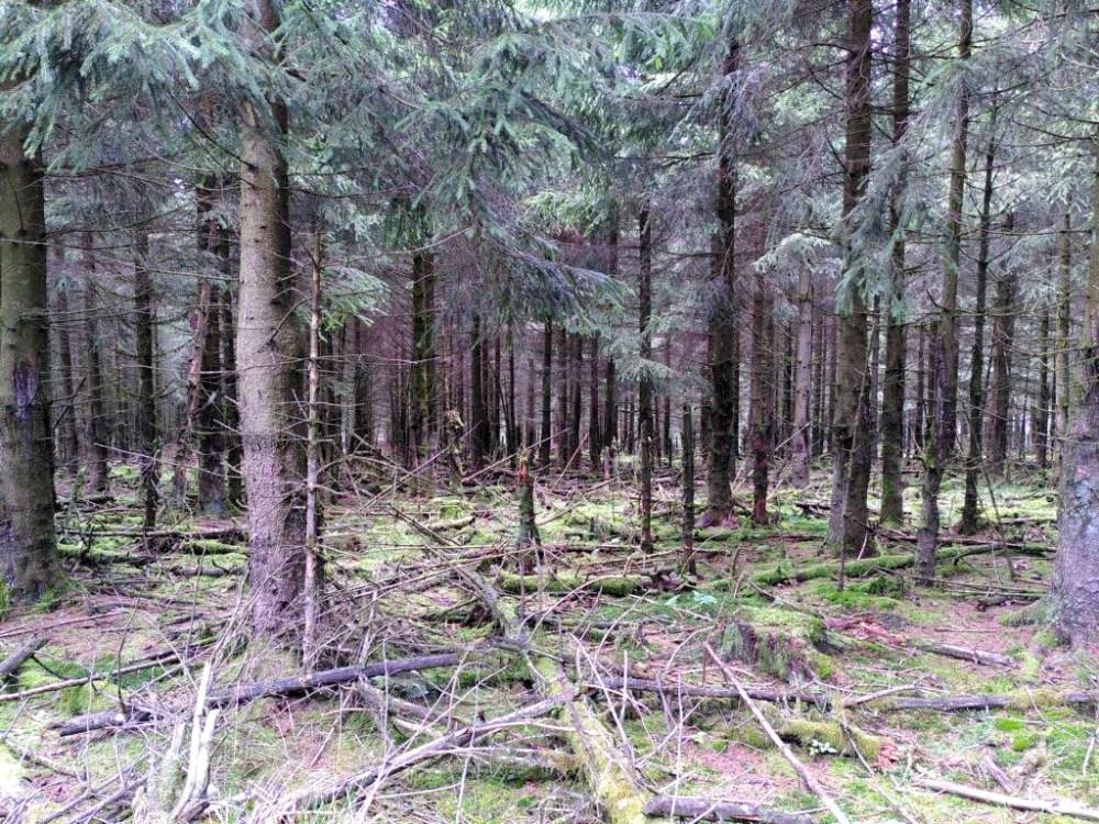 K1024_Waldschäden1